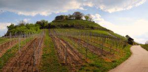 Monde agricole et viticole
