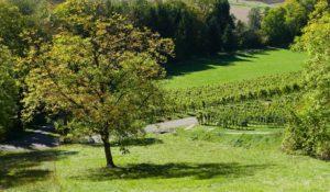 Terres agricoles et terres viticoles